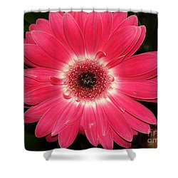 Shower Curtain featuring the photograph Pink Gerbera Daisy by Kerri Mortenson