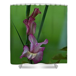 Shower Curtain featuring the photograph Pink Gladiolus by Ed Gleichman