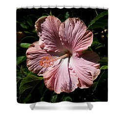 Pink Hibiscus Shower Curtain by Karen Harrison