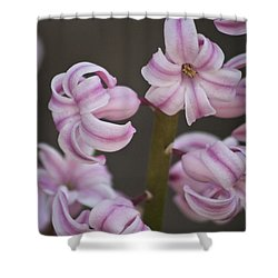 Pink Hyacinth 2 Shower Curtain by Teresa Mucha