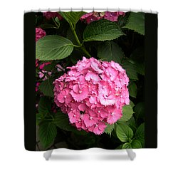 Shower Curtain featuring the digital art Pink Hydranga by Claude McCoy