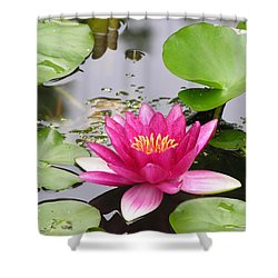 Pink Lily Flower  Shower Curtain by Diane Greco-Lesser