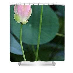 Pink Lotus Buds Shower Curtain by Sabrina L Ryan