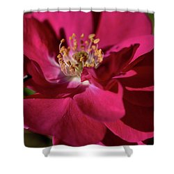 Shower Curtain featuring the photograph Pink Of Rose by Joy Watson