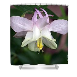 Pink Perfection Shower Curtain by Dorrene BrownButterfield