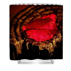 Shower Curtain featuring the photograph Pink Petal by Jessica Shelton
