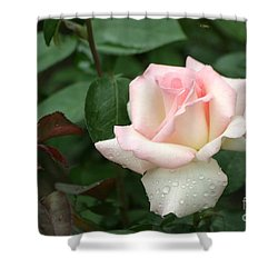 Pink Promise Shower Curtain by Living Color Photography Lorraine Lynch