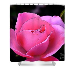 Shower Curtain featuring the photograph Pink Rose Day by Clayton Bruster
