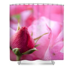 Shower Curtain featuring the photograph Pink Rose by Jeannette Hunt
