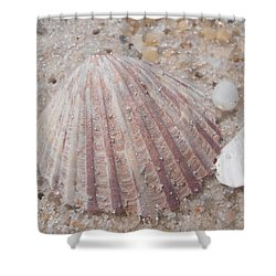 Pink Scallop Shell Shower Curtain by Kimberly Perry