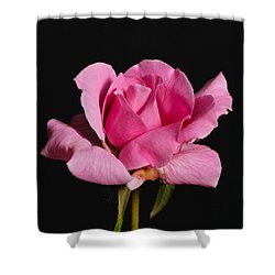 Pink Tea Rose Shower Curtain