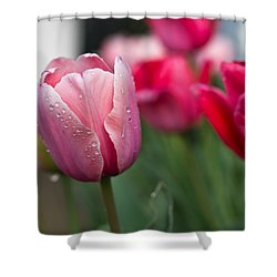Pink Tulips With Water Drops Shower Curtain