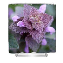 Pink Velvet Shower Curtain by Lisa Phillips