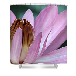 Pink Water Lily Macro Shower Curtain by Sabrina L Ryan