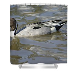 Pintail Duck Shower Curtain by Marilyn Wilson