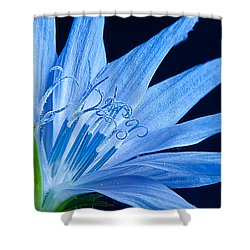 Shower Curtain featuring the photograph Pistil's Of Chicory by Randall Branham