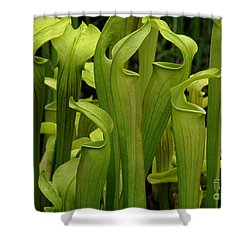 Pitcher Plants Shower Curtain by Bob Christopher