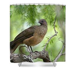 Plain Chachalaca  Shower Curtain