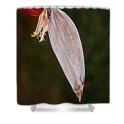 Plantain Bloom Shower Curtain by Susan Candelario