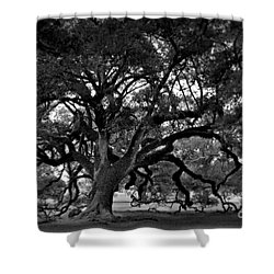 Plantation Oak Tree Shower Curtain by Perry Webster