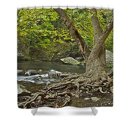 Planted By The Rivers Of Water Shower Curtain by Michael Peychich