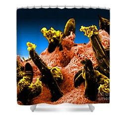 Plasmodium Gallinaceum, Sem Shower Curtain by Science Source