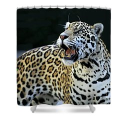 Play With Me Shower Curtain by Sabrina L Ryan