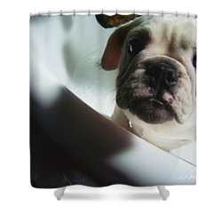 Shower Curtain featuring the photograph Plea For Help by Jeanette C Landstrom