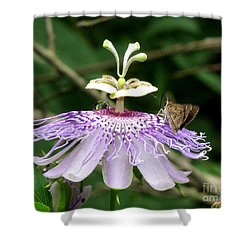 Plenty For All Shower Curtain by Donna Brown