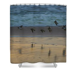 Plovers At Play On A Stormy Morning Shower Curtain