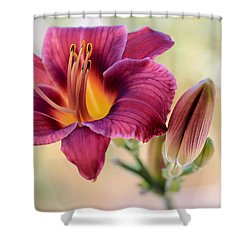 Plum Perfect Shower Curtain by Heidi Smith