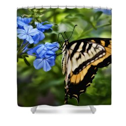 Shower Curtain featuring the photograph Plumbago And Swallowtail by Steven Sparks