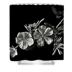Plumbago In Black And White Shower Curtain
