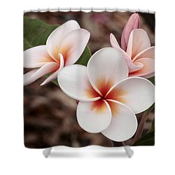 Plumeria   Kona Hawii Shower Curtain