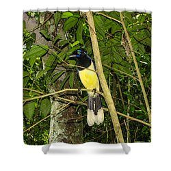 Shower Curtain featuring the photograph Plush-crested Jay by David Gleeson