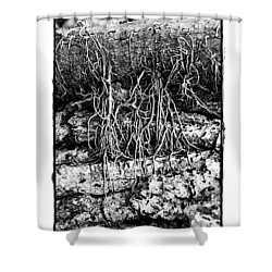Shower Curtain featuring the photograph Poison Ivy Roots by Judi Bagwell