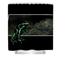 Poisonous Green Frog 02 Shower Curtain by Thomas Woolworth