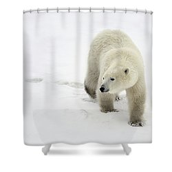 Polar Bear Walking Shower Curtain by Richard Wear
