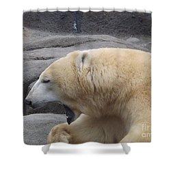 Polar Bear Yawn Shower Curtain by Sara  Raber