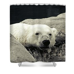 Polar Relaxation Shower Curtain