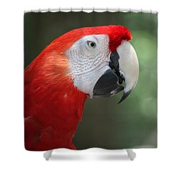 Shower Curtain featuring the photograph Polly by Patrick Witz