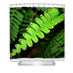 Shower Curtain featuring the photograph Polypody by Judi Bagwell