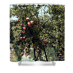 Pomegranate Tree Shower Curtain by Granger