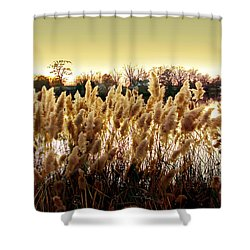 Pond Grasses Shower Curtain by Brian Wallace