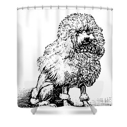 Poodle Shower Curtain by Granger