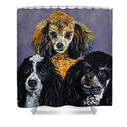 Poodles Shower Curtain by Stan Hamilton