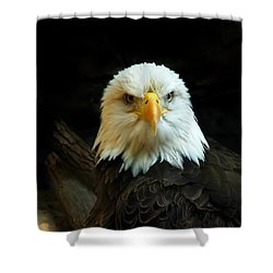Shower Curtain featuring the photograph Portrait American Bald Eagle by Randall Branham