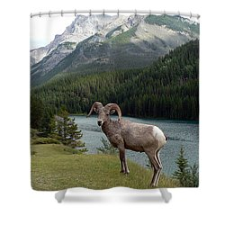 Portrait Of A Bighorn Sheep At Lake Minnewanka  Shower Curtain