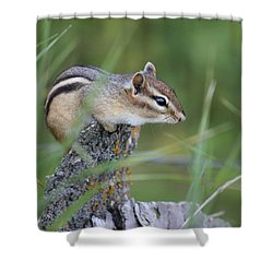 Shower Curtain featuring the photograph Portrait Of A Chipmunk by Penny Meyers