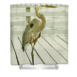 Portrait Of A Heron Shower Curtain by Rick Frost